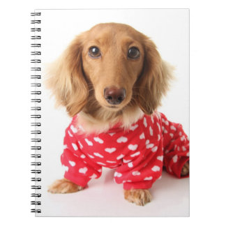 Dachshund Puppy Wearing Valentine's Outfit Notebook