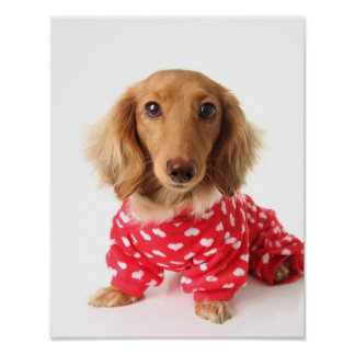 Dachshund Puppy Wearing Valentine's Outfit Poster