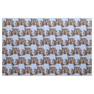 Dachshunds in Blue Fabric