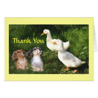 Dachshunds Thank You Card With Ducks