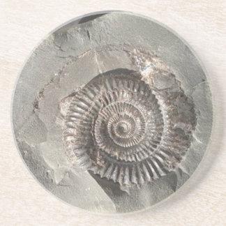 Dactylioceras ammonite in rock coaster