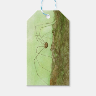 Daddy Long Legs Gift Tags