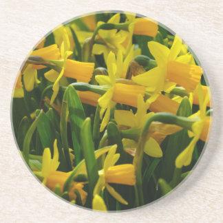 Daffodil Family Coaster