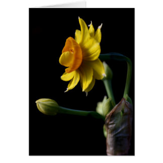 Daffodil Flower Cards