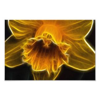 Daffodil Flower Fractal Photograph