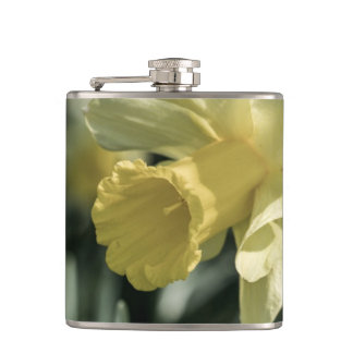 Daffodil Flower Photography Flask