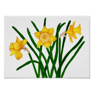Daffodil Flower Watercolour Painting Print Artwork