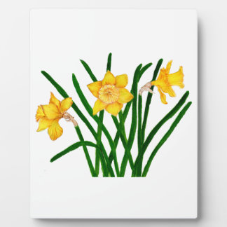Daffodil Flowers Watercolour Painting Artwork Plaque