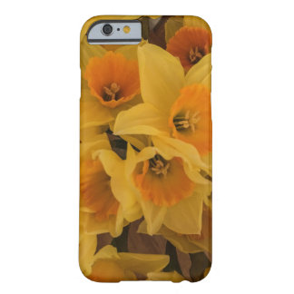 Daffodil iphone6 case