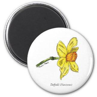 Daffodil Magnet