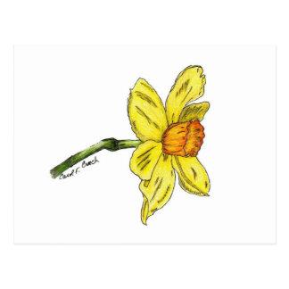 Daffodil (Narcissus) Postcard
