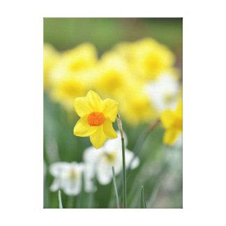 Daffodil Spring Garden Canvas Prints