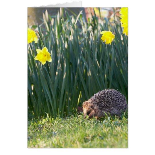 Daffodil Walkabout Greeting Card