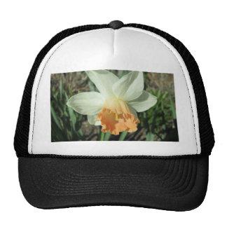 Daffodil White and Orange Cap
