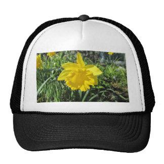 Daffodil Yellow Cap