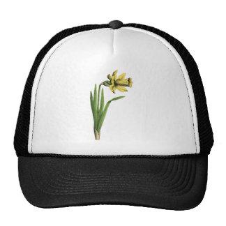 """Daffodil yellow  Old drawing of Daffodil yellow  """" Mesh Hat"""