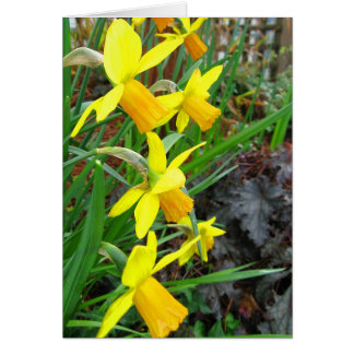 Daffodils and Birds Note Card