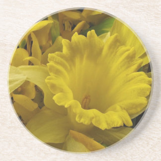 Daffodils and Forsythia Coaster