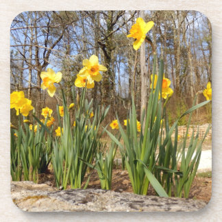 Daffodils at Easter Hard Plastic Coasters