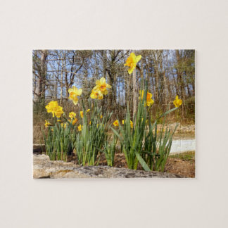 Daffodils at Easter Photo Puzzle With Gift Box
