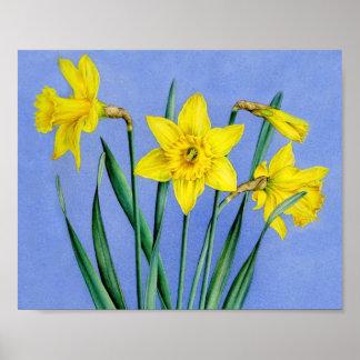 Daffodils botanical fine art poster print