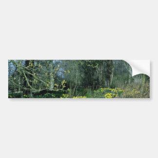 Daffodils  flowers bumper sticker
