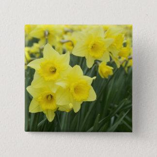 Daffodils RF) 15 Cm Square Badge