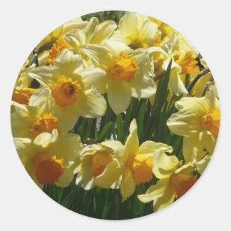 daffodl round sticker