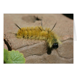 Dagger Moth Caterpillar Nature Photography Card