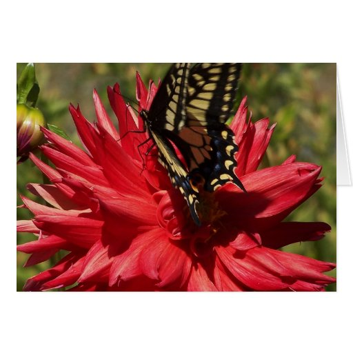 Dahlia And Monarch Butterfly Card