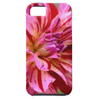 Dahlia Beauty iPhone 5 Cover