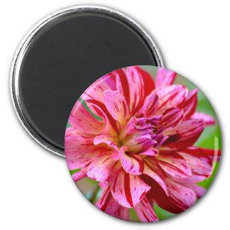 Dahlia Beauty Magnet