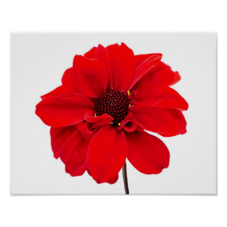 Dahlia Bishop Red Poster