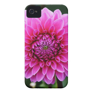 dahlia Case-Mate iPhone 4 cases