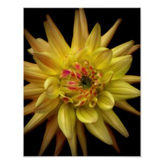 Dahlia Corona Yellow Poster