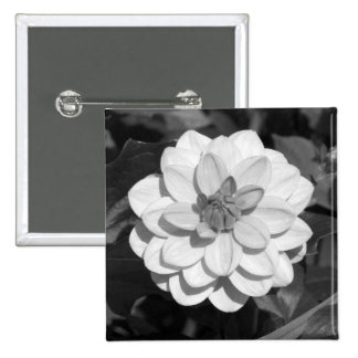 Dahlia 'David Howard'  B&W 15 Cm Square Badge