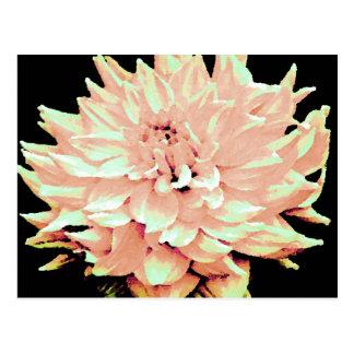 Dahlia - Honeymoon  - pale blush peach Postcard