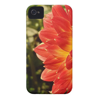 Dahlia iPhone 4 Case