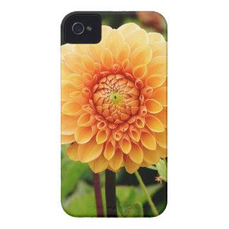 dahlia iPhone 4 Case-Mate case
