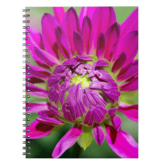 dahlia note books