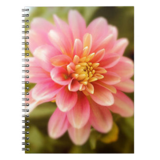 dahlia spiral note books