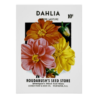Dahlia Vintage Seed Packet Poster