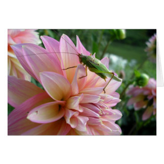 Dahlia with Cricket Card