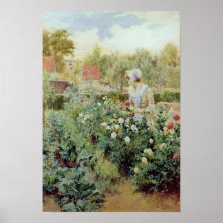 Dahlias, 1896 poster