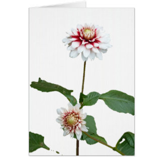 Dahlias 1 card