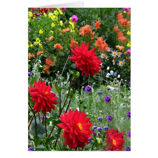 Dahlias for Mother's Day Card
