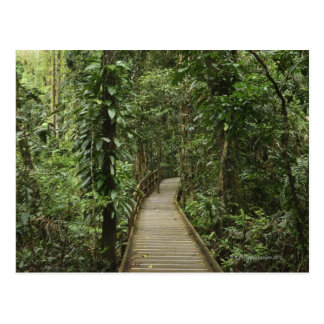Daintree National Park (UNESCO World Heritage 2 Postcard
