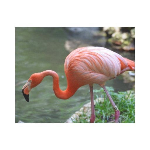 Dainty Flamingo Gallery Wrapped Canvas