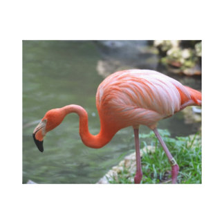 Dainty Flamingo Stretched Canvas Prints