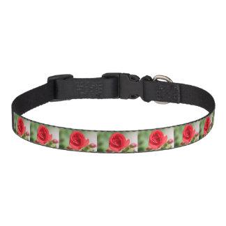 Dainty Red Rose Dog collar